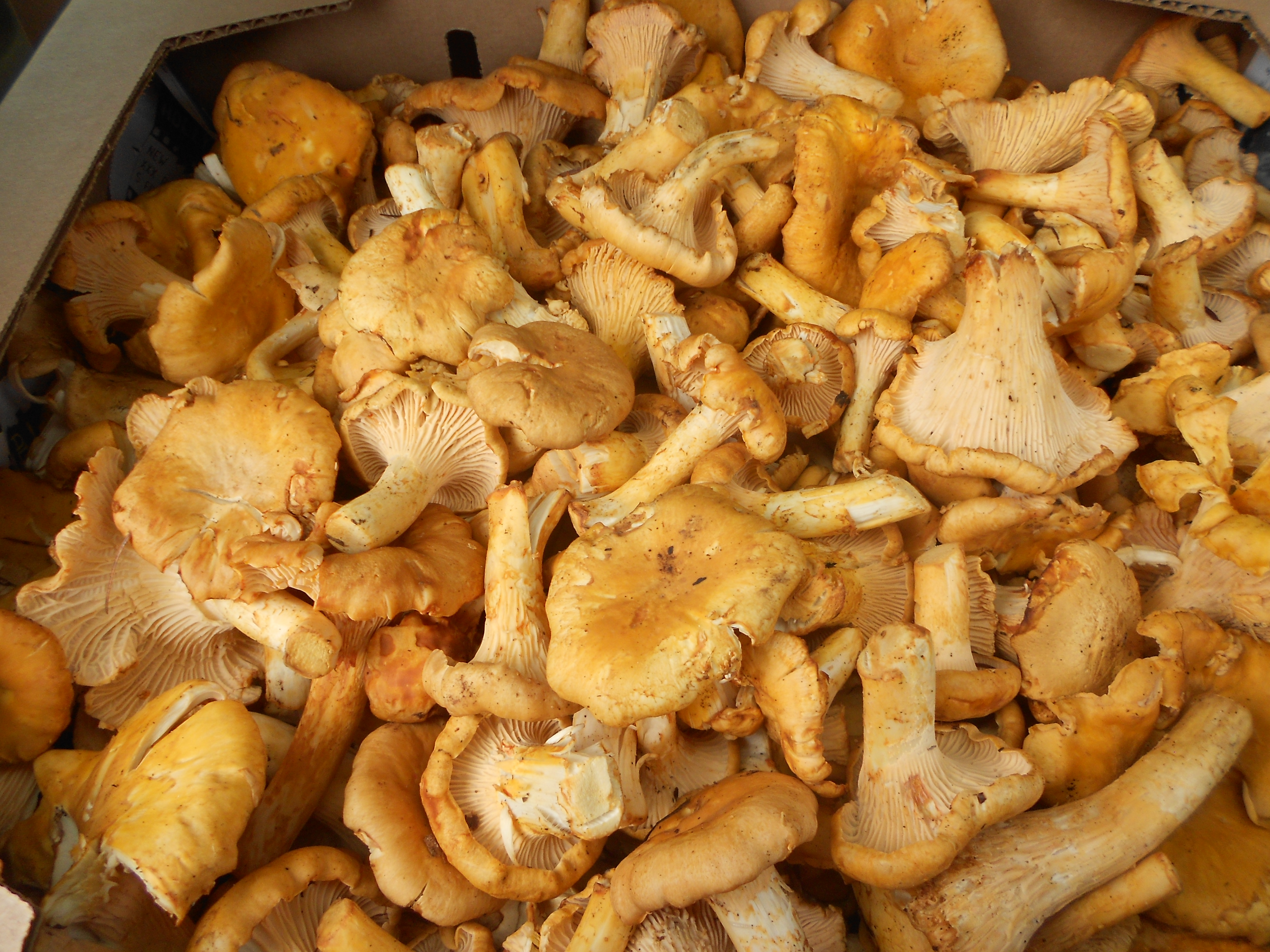 Special Project: Mushroom hunting to survive
